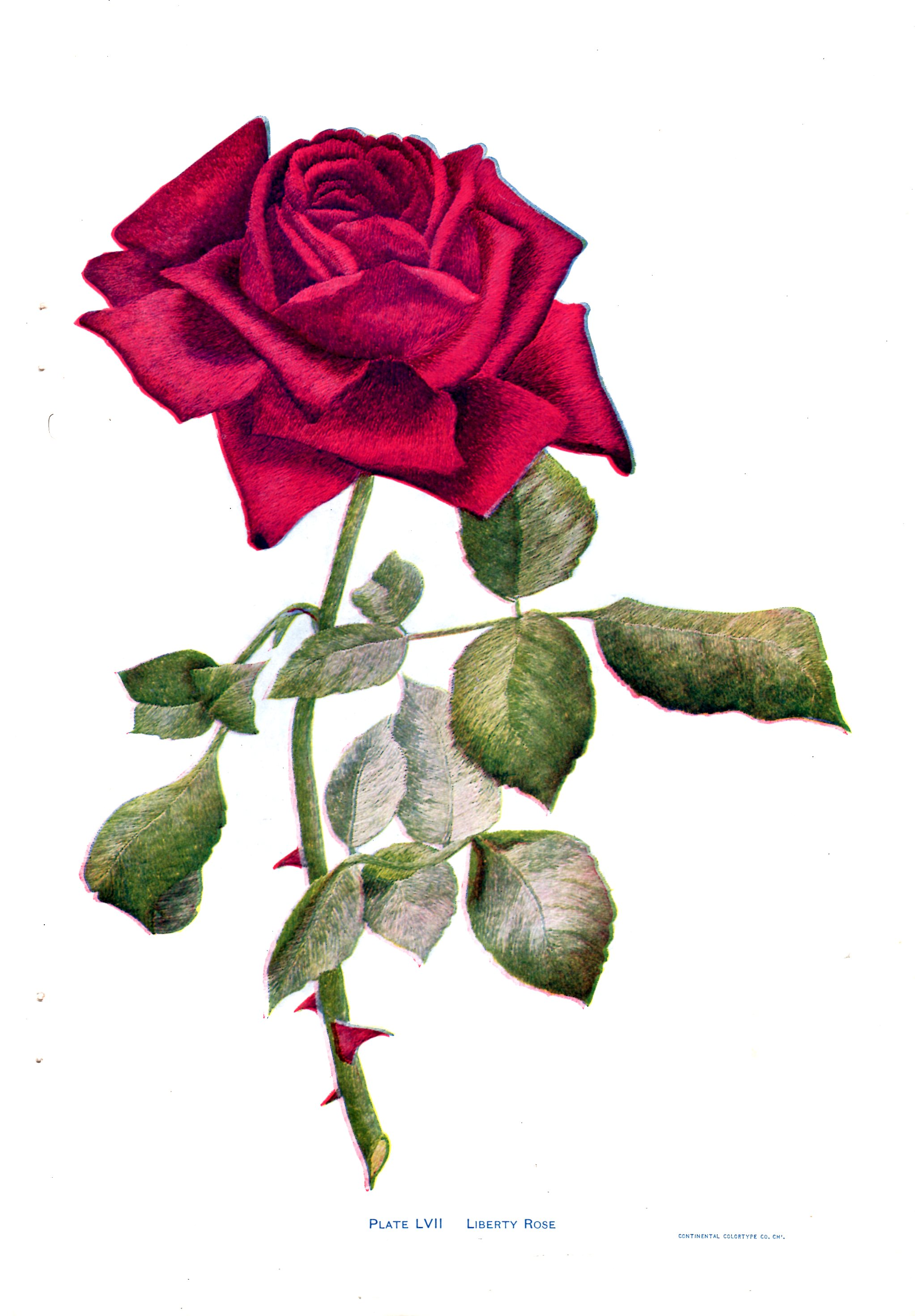 Rose embroidery pattern archives vintage crafts